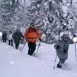 Schneeschuhwandern in tief verschneitem Wald
